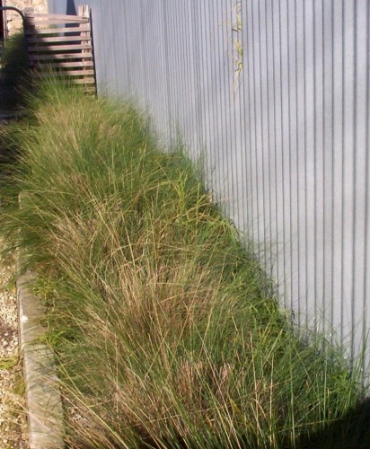 Grasses in a Garden Bed