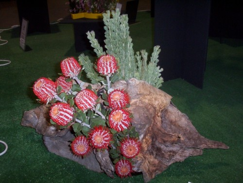 Banksia coccinea in flower arrangement