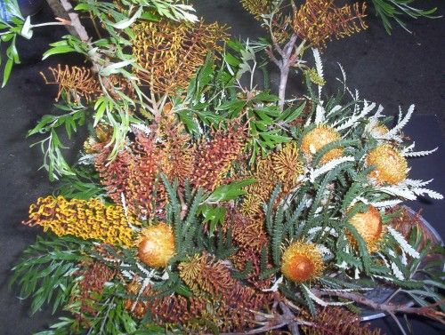 Grevillea robusta with Dryandra in Floral Arrangement
